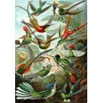 Puzzle  Grafika-00615 Ernst Haeckel : Les Trochilidés , 1904