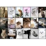 Puzzle  Grafika-01212 Collage - Chats