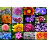 Puzzle  Grafika-01215 Collage - Fleurs de Printemps
