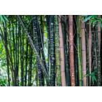 Puzzle  Grafika-01370 Bambou