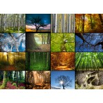 Puzzle  Grafika-01474 Collage - Arbres