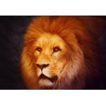 Puzzle  Grafika-01486 Lion