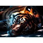 Puzzle  Grafika-01490 Tigre