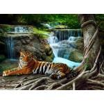 Puzzle  Grafika-01562 Tigre