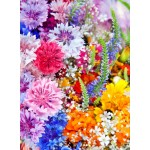 Puzzle  Grafika-01638 Explosion de Fleurs