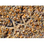 Puzzle  Grafika-01685 Coquillages et Etoiles de Mer