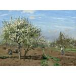Puzzle  Grafika-02029 Camille Pissarro : Verger en Fleurs, Louveciennes, 1872
