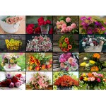 Puzzle  Grafika-02569 Collage - Fleurs