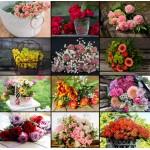 Puzzle  Grafika-02570 Collage - Fleurs
