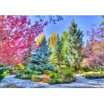Puzzle  Grafika-02817 Forêt Colorée, Colorado, USA