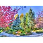 Puzzle  Grafika-02818 Forêt Colorée, Colorado, USA