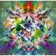 Fleurs et Papillons de Printemps
