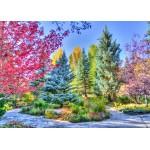 Puzzle   Forêt Colorée, Colorado, USA