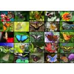 Puzzle  Grafika-T-00046 Collage - Papillons