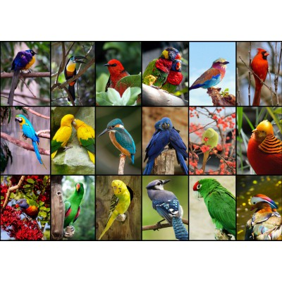 Puzzle Grafika-T-00047 Collage - Oiseaux Colorés