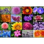 Puzzle  Grafika-T-00056 Collage - Fleurs de Printemps