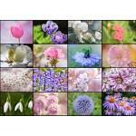 Puzzle  Grafika-T-00085 Collage - Fleurs de Printemps