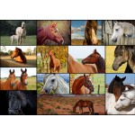 Puzzle  Grafika-T-00102 Collage - Chevaux