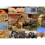 Puzzle  Grafika-T-00132 Collage - Wildlife