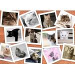 Puzzle  Grafika-T-00381 Chats