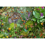 Puzzle  Grafika-T-00549 François Ruyer - Jungle