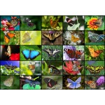 Puzzle  Grafika-T-00623 Collage - Papillons