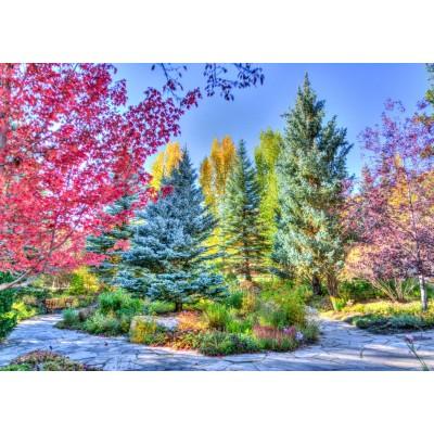 Puzzle Grafika-T-00853 Forêt Colorée, Colorado, USA