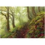 Puzzle  Heye-29519 Les forêts magiques : Le chemin