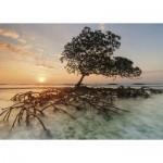 Puzzle   Red Mangrove
