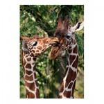 Puzzle  Jumbo-18340 Girafes