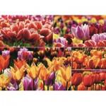 Puzzle  Jumbo-18364 Tulipes
