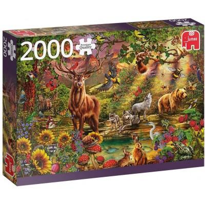 Puzzle Jumbo-18868 Forêt Magique au Coucher du Soleil