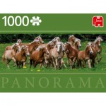 Puzzle   Haflinger Horses
