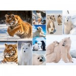 Puzzle  King-Puzzle-55870 Collage - Artic Life