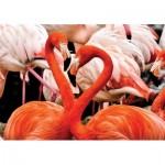 Puzzle  KS-Games-10107 Flamingo Lovers