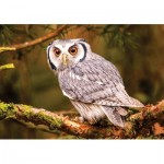Puzzle   Bengal Eagle Owl