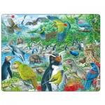 Puzzle Cadre - New Zealand's Picturesque Wildlife