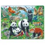Puzzle Cadre - Panda Bear Family on a China Mountain Plateau