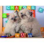 Puzzle  Nathan-86861 Chats