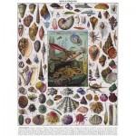 Puzzle   Vintage Images - Mollusks