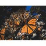 Puzzle  New-York-Puzzle-NG1987 Pièces XXL - Monarch Butterflies
