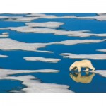 Puzzle  New-York-Puzzle-NG1990 Pièces XXL - Polar Bear on Ice