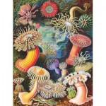 Puzzle  New-York-Puzzle-PD1921 Vintage Images - Sea Anemones