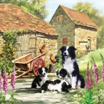 Puzzle   Border Collie Barn