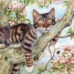 Puzzle   Catnap