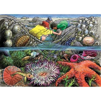 Cobble-Hill-58805 Puzzle Cadre - Exploring the Seashore