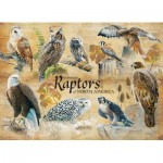 Puzzle   Common Raptors