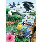 Puzzle Cadre - North American Birds
