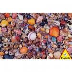 Puzzle  Piatnik-5663 Pêle-mêle de coquillages