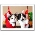 Pintoo-H1387 Puzzle en Plastique - Christmas kittens